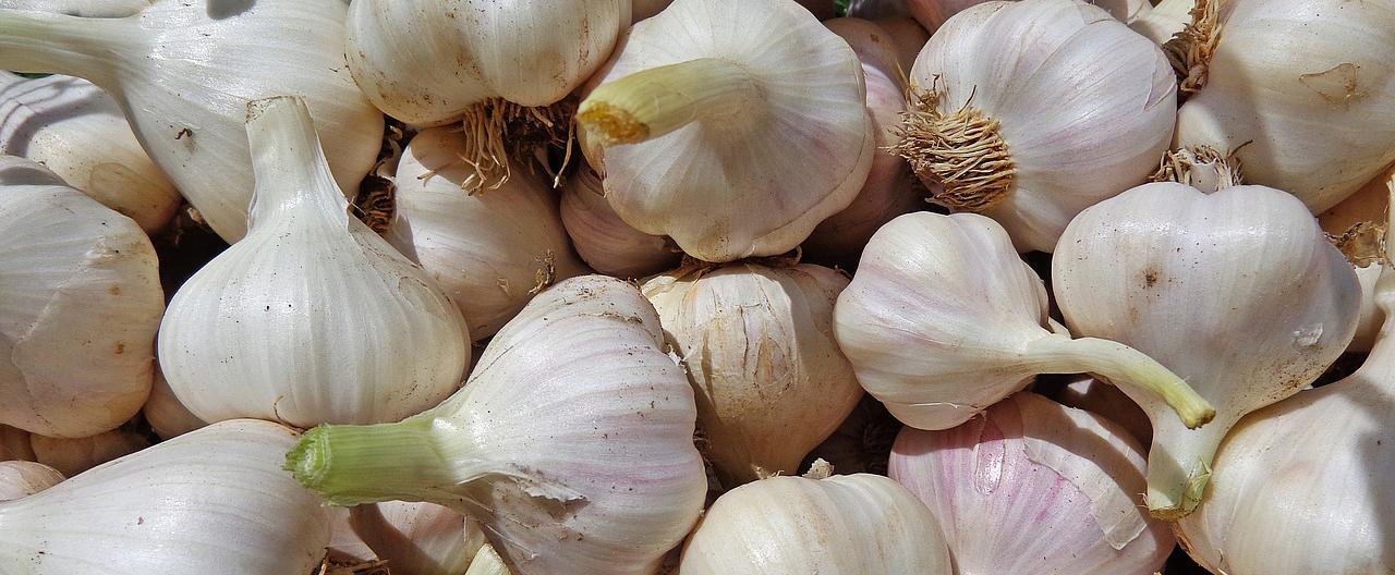 garlic-864296_1280